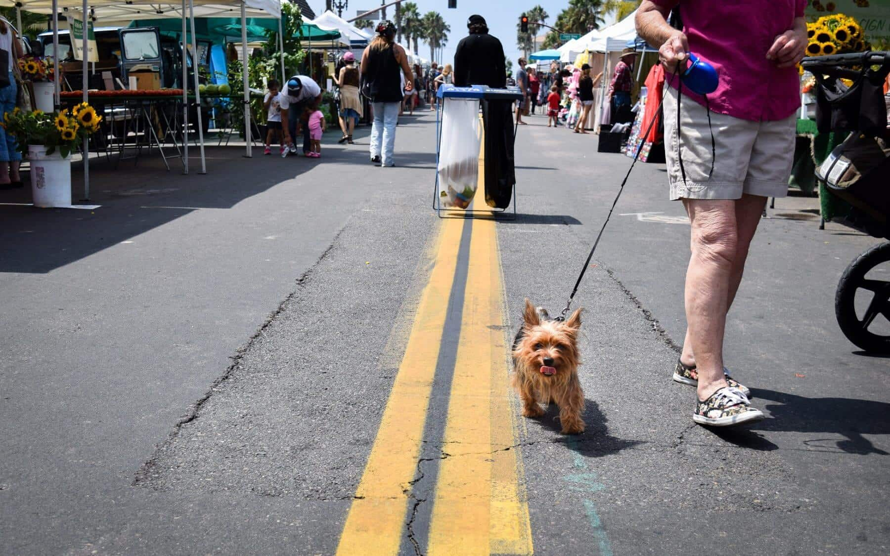 Dog at the Farmers Market Oceanside
