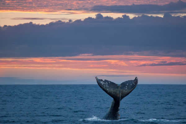 gray-whale-sunset