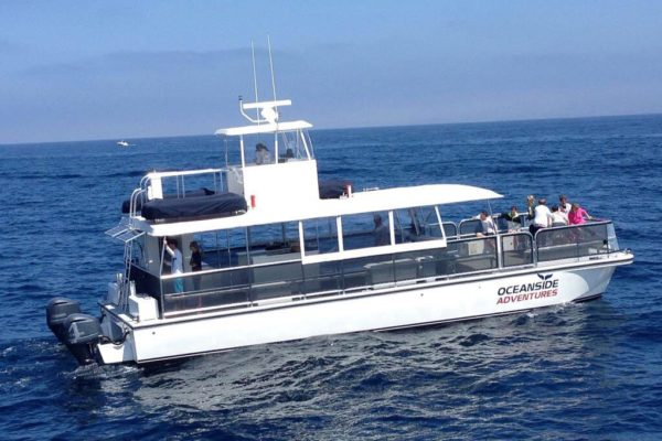 Oceanside Adventures Luxury Cruise Boat Ride Whale Watching